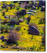 Goldenfield Hillside Canvas Print