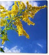 Goldenrod In The Sky Canvas Print
