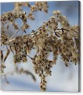 Goldenrod In The Snow Canvas Print