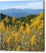 Goldenrod Mountain View Canvas Print