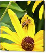 Goldenrod Soldier Beetle Canvas Print