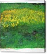 Goldenrods In Field Canvas Print