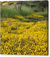 Goldfields And Grasses Canvas Print