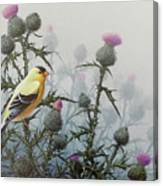 Goldfinch And Thistles Canvas Print