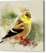 Goldfinch Watercolor Art Canvas Print