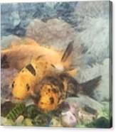 Goldfish In An Aquarium Canvas Print