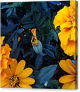 Goldies Canvas Print