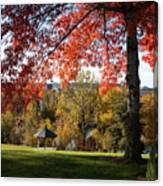 Gonzaga With Autumn Tree Canopy Canvas Print