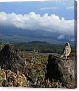Good Morning Maui Canvas Print