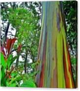 Good Morning Peeps, Rainbow Eucalyptus Canvas Print