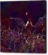 Goose Bird Wildlife Nature Fly  Canvas Print