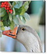 Goose Eating Berries Canvas Print