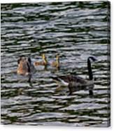 Goose Family Canvas Print