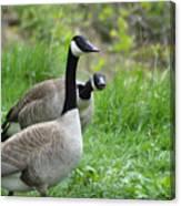 Goose Warning Canvas Print
