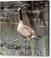 Goose Posing Canvas Print