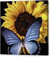 Gorgeous Blue Butterfly Canvas Print