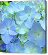 Gorgeous Blue Colorful Floral Art Hydrangea Flowers Baslee Troutman Canvas Print