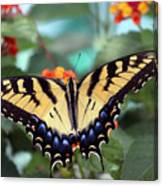 Gorgeous Butterfly Canvas Print
