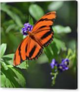 Gorgeous Close Up Of An Oak Tiger Butterfly In Nature Canvas Print