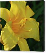 Gorgeous Flowering Yellow Daylily Blooming In A Garden Canvas Print