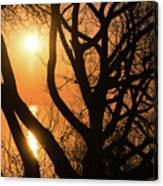 Gorgeous Morning Through The Tree Screen Canvas Print