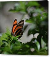 Gorgeous View Of An Oak Tiger Butterfly In The Spring Canvas Print