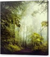 Gorgeous Woods Canvas Print