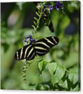 Gorgeous Zebra Butterfly On Some Blue Flowers Canvas Print