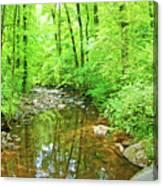 Georgia Stream In Summer Canvas Print