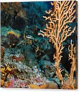 Gorgonian Canvas Print