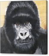 Gorilla On Wood Canvas Print