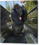 Gorilla With Lollipop Canvas Print