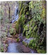 Gorman Falls At Colorado State Park - San Saba Texas Hill Country Canvas Print