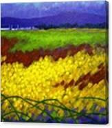 Gorse - County Wicklow - Ireland Canvas Print