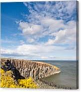 Gorse At Cullernose Point Canvas Print