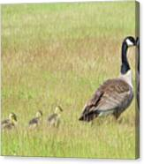 Goslings Following Mama Canvas Print