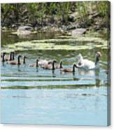 Goslings In A Row Canvas Print