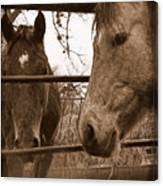 Gossip At The Fence Canvas Print