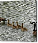 Got All Your Ducks In A Row Canvas Print