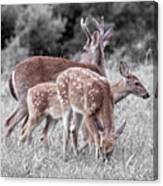 Humor Got Some Doe And Two Bucks Canvas Print
