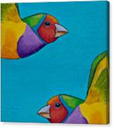 Gouldian Finches Canvas Print