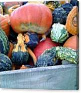 Gourds In A Crate Canvas Print