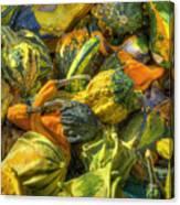 Gourds Canvas Print