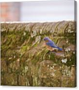 Governor's Palace Bluebird Canvas Print