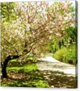 Grace Of Magnolia Canvas Print
