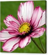 Graceful Bloom Canvas Print