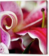 Graceful Lily Series 25 Canvas Print