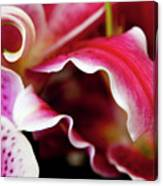 Graceful Lily Series 26 Canvas Print