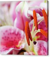 Graceful Lily Series 29 Canvas Print