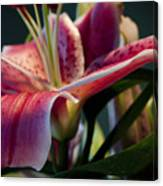 Graceful Lily Series 8 Canvas Print
